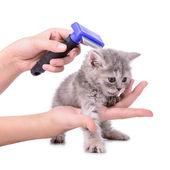 Kitten grooming comb — Stock Photo