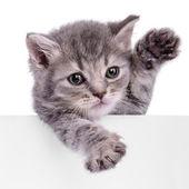 Kitten holding billboard — Stock Photo