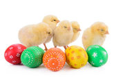 Easter eggs with newborn chickens — Stock Photo