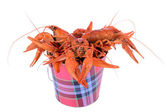 Boiled red crawfishes — Stok fotoğraf