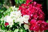 Garden flowers close up — Stock Photo