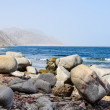 Rocky coast — Stock Photo #16897171