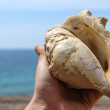 Shell in hand — Stock Photo #16898855