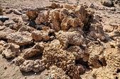 Haldy mrtvých korálů — Stock fotografie