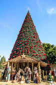 Christmas tree in Bethlehem, Palestine — Stock Photo