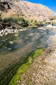 Riacho de wadi hasa na jordânia — Foto Stock