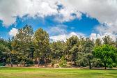 Park Landscape — Stock Photo