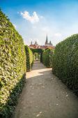 Peacock trädgårdar wallenstein palace, prag — Stockfoto