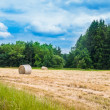 Field with haystacks — Stock Photo #39025421