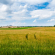 Stock Photo: Pastoral Field