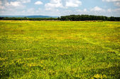 Sky over the field — Stock Photo