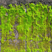 Moss on wall — Stock Photo