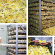 Chicken Farm - Stockfoto