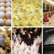 Chicken farm - multiscreen - Stockfoto