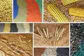 Много семян — Стоковое фото