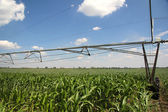 Irrigation of corn fields — Stock Photo