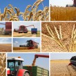 Wheat harvest - collage - Stock Photo