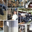 Foto Stock: Dairy farm, collage
