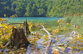Stump and fallen tree in a lake — Stock Photo