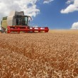 Постер, плакат: Combine harvesting wheat