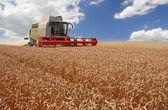 Combine harvesting wheat — Stock Photo