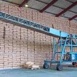 Sugar Bags and Conveyor — Stock Photo