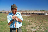 Old Shepherd — Stock Photo