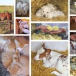 Baby Animals Collage — Stock Photo