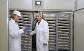 Farmers controlling chicken eggs in incubator — Stock Photo