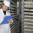 Farmer controls chicken eggs in incubator — Stock Photo