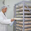 Stock Photo: Farmer controls chicken eggs in incubator