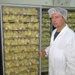 Picanton en incubadora — Foto de Stock