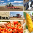 Agriculture - collage — Stock Photo