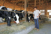 Farmer and cows in cowshed — Stock Photo