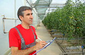 Farmer in a Greenhouse — 图库照片