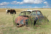 Car Wreck And Horses Grazing — Stockfoto