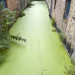 Canal in Bruges - Stock Photo