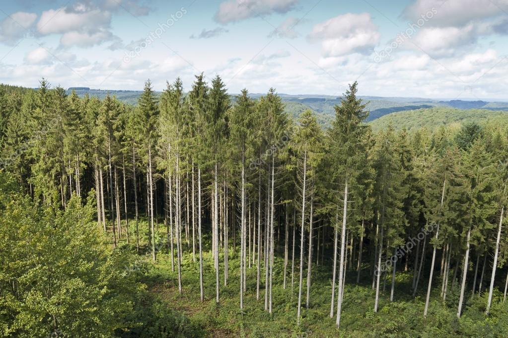 针叶树木材 - 图库图片