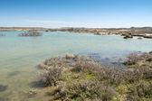 Zapata pond — Stock Photo