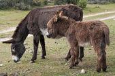 Deux ânes — Photo