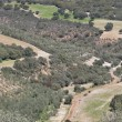 Olive groves — Foto de Stock