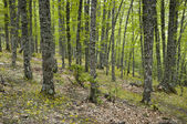 Chestnut grove — Stock Photo
