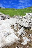 Schnee in den bergen sommer — Stockfoto