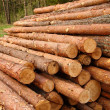 Logs — Stock Photo #13937614