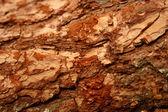 Log background — Stock Photo