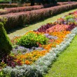 Stock Photo: Bright flowerbed