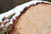 Cut log covered with snow — Stock Photo