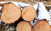 Cut logs covered with snow — Stock Photo