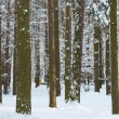 bomen met sneeuw in de winter park — Stockfoto