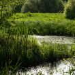 Small ponds — Stock Photo